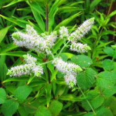 Best herbs for indoor gardening.