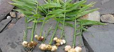 Herb Garden, Garden Plants, Home And Garden, Go Green, Natural Living, Garden Planning, Agriculture, Herbs, Backyard