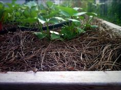 Use Mulch and Straw to Keep Cats and Critters at Bay