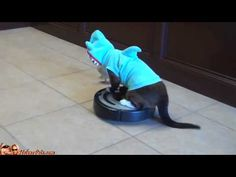 Cat In A Shark Costume Chases A Duck While Riding A Roomba.   i can't handle this.