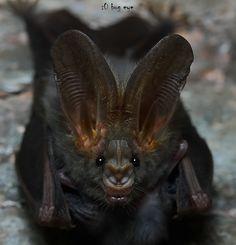 Fotografia smile in darkness ! de bug eye :) na 500px