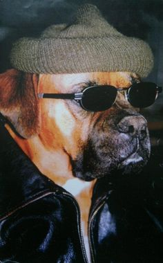 My Boxer dog Rufus in disguise as a human.