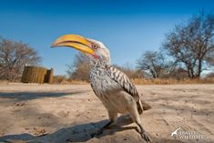 The Central Kalahari Game Reserve offers some of the best Kalahari camping in Botswana. Looking for a true wilderness camping experience? Sanibel Island, Game Reserve, Churchill, Water Features, Wilderness, Sea Shells, Pond, Trail, Wildlife