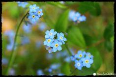 Fleurs Flowers Printemps Spring dansloeildekro