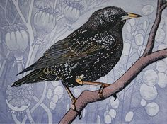 Starling. Linocut, 4 of 6 remaining, 40 x 30 cms. £180 unframed.