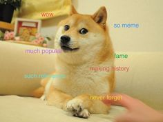 This is Doge. He's one of the hottest memes on the internet. You could even call him a hot doge.