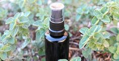 Trying to steer clear of chemically-laden air fresheners? Try this simple DIY air freshener spray! You'll need three simple ingredients: Filtered water Vodka Essential oil(s) You need only a tiny bit of vodka, so if keeping alcohol in the home is a problem, be sure to buy the smallest bottle. The vodka works as a...Read More »
