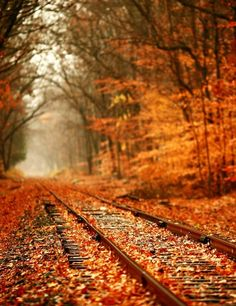 What is it about railroad tracks that draws us to think of hopes and dreams ahead of us? Brilliant orange and red fall leaves decorate the autumn woods and train tracks. Share Pictures, Fall Pictures, Pretty Pictures, Autumn Photos, Track Pictures, Paris Pictures, Trains, All Nature, Autumn Nature