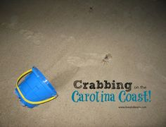 C is For Crabbing at the Carolina Coast - Live and Learn Farm Live And Learn, Coffee Cans, Blogging, Coast, Learning, Teaching, Studying