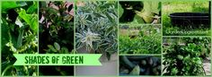 Shades of Green, What are you favorite shades of green.  Stop by and discover why green is a great thing.  Garden Up Green