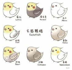 Image result for chibi cockatoo how to draw