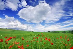 Landscape - green fields, the blue sky and white clouds