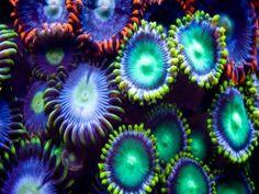 Vistosas y coloridas anémonas de mar