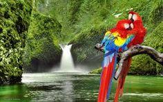 Australian parrots