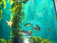 The Monterey Bay Aquarium is renowned for its ocean aquariums and study of ocean sciences.