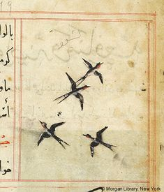 Bestiary, Four swallows flying; The Morgan Library & Museum