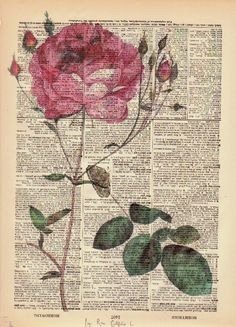 Rose Dictionary Print