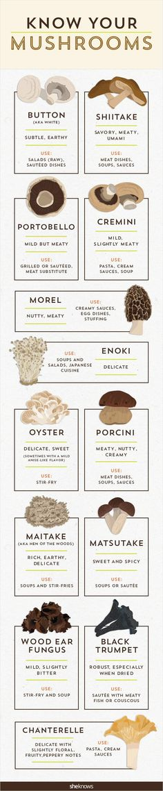 It's time to get your fungus knowledge down with this mushro.-It's time to get your fungus knowledge down with this mushroom infographic It's time to get your fungus knowledge down with this mushroom infographic - Vegetarian Recipes, Cooking Recipes, Healthy Recipes, Healthy Tips, Cooking Hacks, Cooking Quotes, Cooking Pasta, Cooking Steak, Dishes Recipes