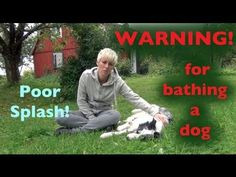 This is a great video on the importance of drying your dog after a bath or after they are wet. Thanks Kikopup! Pet Health, Health Care, German Shepherd Information, Medication For Dogs, Sick Dog, Dog Diet, Dog Training Videos, Companion Dog, Getting A Puppy