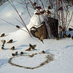 A food heart for our little birds in winter. - A food heart for our little birds in winter. Winter Szenen, I Love Winter, Winter Magic, Winter Time, Winter Christmas, Snowy Day, Snow Scenes, All Nature, Winter Beauty