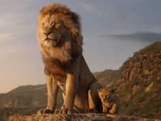 Mufasa standing on the edge of a cliff with Simba next to him Lion King Remake, The Lion King, Lion King Movie, Donald Glover, King Kong, Live Action, Le Roi Lion Film, Lion King Soundtrack, Beyonce