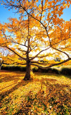 The best trees for autumn colour | The Telegraph Autumn Day, Autumn Trees, Autumn Leaves, Front Yard Landscaping, Flora, Country Roads, Landscape, Garden, Outdoor Decor