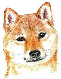 Shiba Inu Dog Set of 4 Temporary Tattoos (Waterproof Lasts 3 to 4 days)