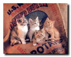 Absolutely Fabulous! If you want to transform look of your living space, bedroom or living room, add this cute kittens art print poster. This poster depicts the image of cute cats sitting together looking very adorable which is sure to grab lot of attention. This poster is perfect for kid's room and ensures high quality with perfect color accuracy.