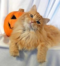 All cute and Halloweeny...