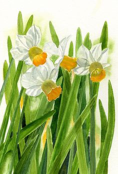 Daffodils With Green Leaves by Sharon Freeman - Daffodils With Green Leaves Painting - Daffodils With Green Leaves Fine Art Prints and Posters for Sale