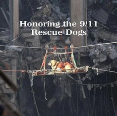 A 9/11 rescue dog.