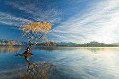 NZ-WA-Lake-Wanaka-Willow-Reflection-01.jpg