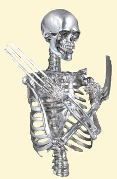 wolverine's skeleton | Recent Photos The Commons Getty Collection Galleries World Map App ...