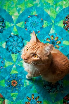 The original pinner loved the color of the cat's eyes and I have to agree - they pop on this quilt!
