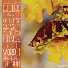 """""""By this gospel you are saved, if you hold firmly to the word I preached to you."""" -1 Corinthians 15:2 NIV #Saved #GodIsGood #TheWord https://mychristiancare.org/"""