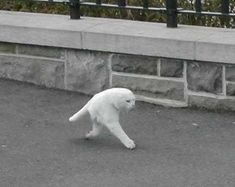 Google Street View cuts a cat in half