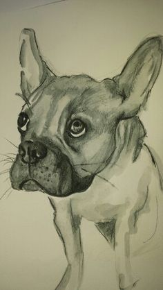 French Bulldog by Lindsay Norman