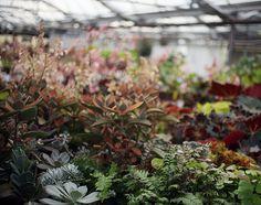 plants by Sarah Ryhanen, via Flickr