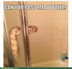 Funny pictures about Showering Snake. Oh, and cool pics about Showering Snake. Also, Showering Snake photos. Cute Animal Memes, Animal Jokes, Funny Animal Pictures, Cute Funny Animals, Funny Cute, Animal Funnies, Meme Pictures, Hilarious, Snake Meme