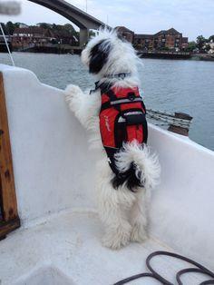 Puppy in life jacket - so big now! Charlie Tibetan Terrier