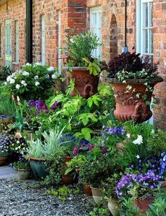 A blog for passionate gardeners with an emphasis on the quaint English Cottage Garden style