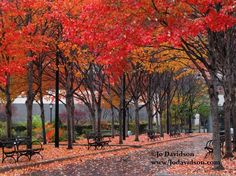 Autumn in New York City    RuMe - Fall in New York Collection