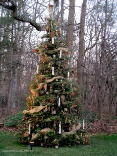 BEAUTIFUL outdoor Christmas tree decorated & full of edibles for the birds to feast on! Christmas 2015 at Longwood Gardens (1001 Longwood Rd, Kennett Square, PA 19348). Their gardens are BEAUTIFUL at Christmas! ~ Bird Tree http://ourfairfieldhomeandgarden.com/a-longwood-christmas-evening-stroll/