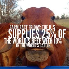 Farm Fact Friday #beef