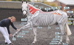Bringing lessons to life: Miss Higgins with her horse Kiitos who has his skeleton painted on his body
