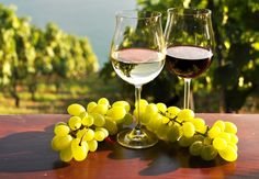 Wines from the cradle of wines Israel