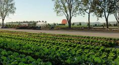"""In Irvine, California, a 7.5 acre plot of land was turned into """"The Incredible Edible Park"""", a community garden that feeds 200,000 people each month."""