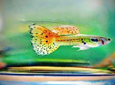#aquarium #Fish #FishTank #TropicalFish #Goldfish aquarium #aquarium for all #Fish #FishTank #TropicalFish #Fishing #NomCat #Salmon #Aquarium #Health #Food #Healthy #Seafood #Heart #HealthyLiving #FishTank #HeartHealth #Recipe #FlyFishing #TropicalFish #HealthyEating #Trout #Goldfish #Cooking #Water #Goldfish #Water #Saltwater #Vancouver #Dubai #NomCat #MontereyBayAquarium #SeaLife #UAE #fish #aquarium #fishtank #swim #swimming #water #coral #reef #reeftank #tropical #koi #saltwater…