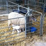 Lambing Season 2020 See link to find out more