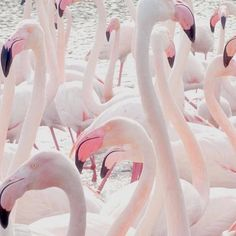 A group of flamingos is called a flamboyance. A FLAMBOYANCE?! Flip that's what they call us when we step up in the building... #swerve  cred @girl_behavior